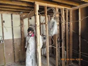 Additional Services - Mold Remediation
